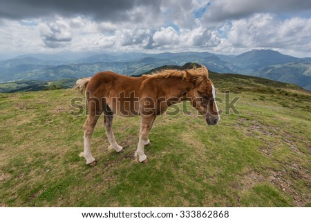 A young foal walking in the mountain with a blue cloudy sky - stock photo