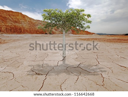 A young green tree sprouting from an arid barren wasteland for the concept of life triumph over adversity.