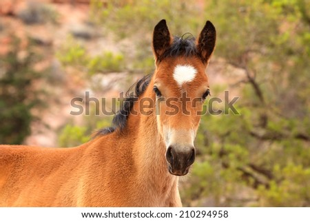 A young horse on a Utah ranch pricks his ears and looks curiously at the camera. - stock photo