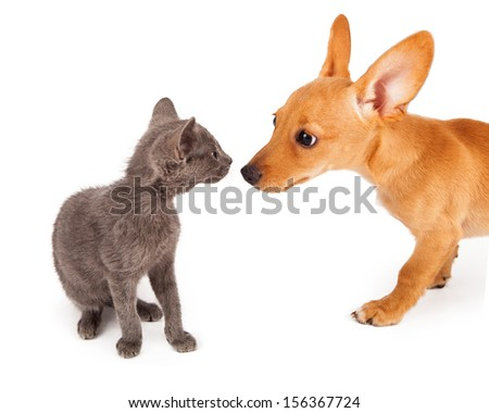 A young kitten and a little puppy greeting each other  - stock photo