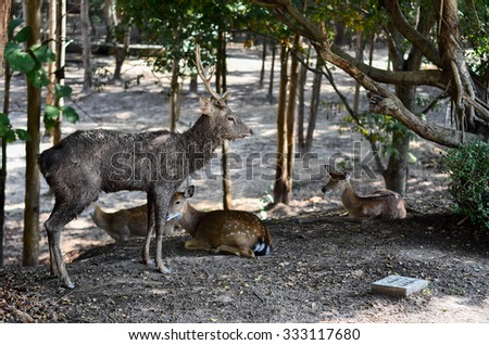 A young male deer and his family