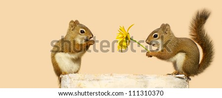 A young male squirrel offering a flower to a  happy looking pretty little female while perched on a log in the spring, with copy space. Part of a series.
