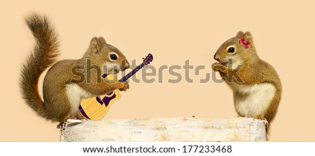 A young male squirrel playing a love song for his sweetheart.  Part of a fun series. - stock photo