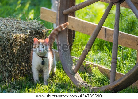 A young pet cat with a bell collar and wet with morning meadow dew, playfully sneaks around a wagon wheel and hay bale in a country style back yard.