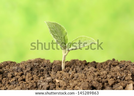 A young plant is growing in the dirt on a light green background