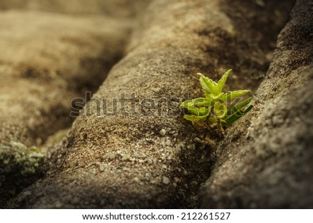 a young plant is on the rock