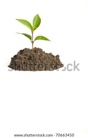 A Young Sprout in Dirt Isolated on White - stock photo