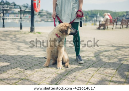 A young woman is standing in the street with her Leonberger puppy on a sunny day