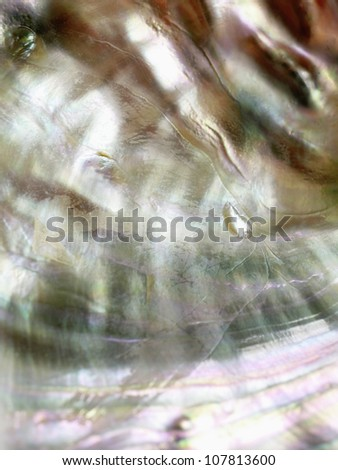 Abalone pearl - stock photo