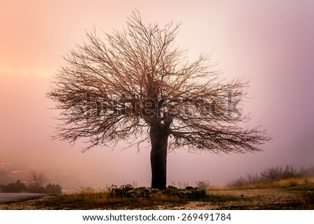 Abandoned and lonely tree in mountains shrouded in mist - stock photo