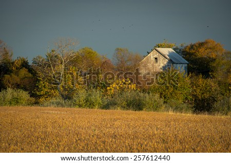 Abandoned Barn In The Trees is a landscape photograph that was created in the early evening in late fall. The abandon barn is barely visible over the autumn colored overgrowth at the end of the field. - stock photo