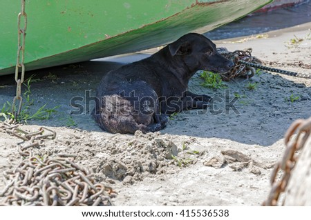 Abandoned black dog lies in the shadow of a boat - stock photo