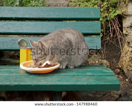 Abandoned cat fed on a bench  (Paris France)  - stock photo