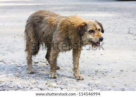 Abandoned dog begging for food. - stock photo