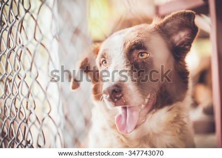 abandoned dog locked in a cage,vintage color tone - stock photo
