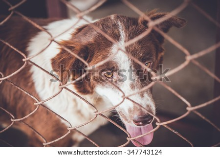 abandoned dog locked in a cage,vintage color tone