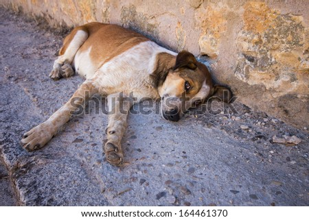 Abandoned dog lying on the ground with sad eyes - stock photo