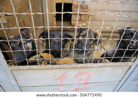 Abandoned dogs in the kennel,homeless dogs behind bars in an animal shelter.Sad looking dog behind the fence looking out through the wire of his cage/Animal shelter.Boarding home for dogs
