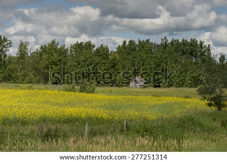 Abandoned Farmhouse in a field, Lake Audy Campground, Riding Mountain National Park, Manitoba, Canada - stock photo