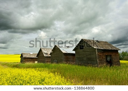 Abandoned granaries in canola field with rain clouds overhead - stock photo