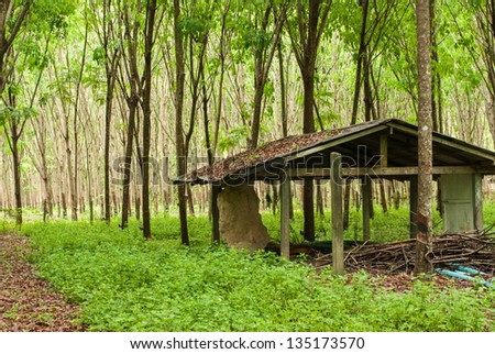 Abandoned house in rubber plantation - stock photo