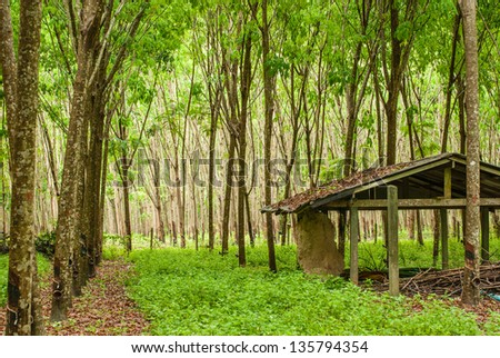 abandoned house in rubber plantation, South of Thailand - stock photo