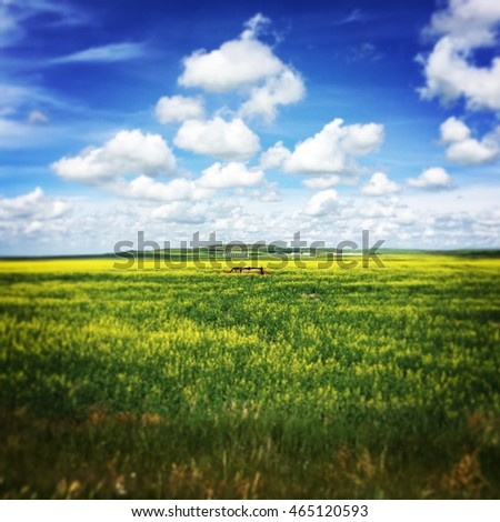 Abandoned oil well in bright yellow and green grass summer field. Bright blue sky and white clouds and farm buildings in distance in background. Instagram effects.