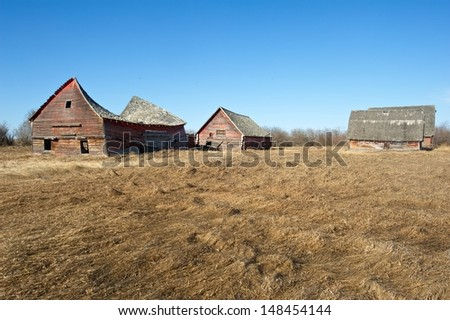 Abandoned old  farm.  Three barns in a field of dry dead grass in spring - stock photo