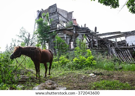 Abandoned old house in the woods and horse - stock photo