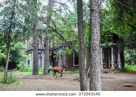 Abandoned old house in the woods and running horse - stock photo