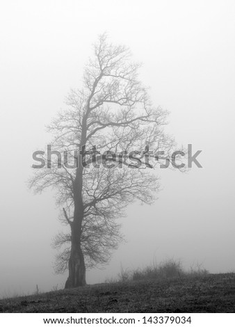 Abandoned old tree in meadow in cold foggy morning. - stock photo