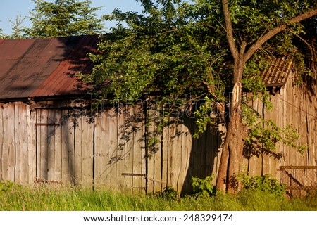 Abandoned old wooden shack lone tree shadow on boards, sunlight warm colors tonation in horizontal orientation, nobody.  - stock photo