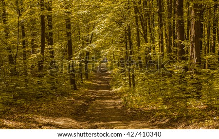abandoned road running through the dense green forest and penetrating rays of the sun