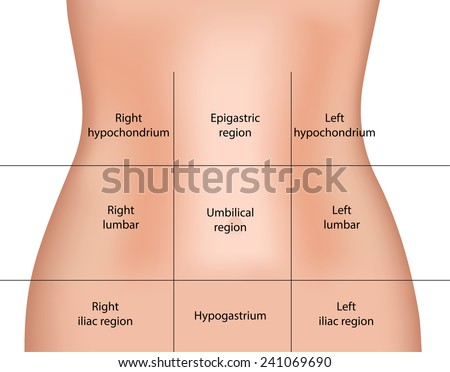 abdominal anatomy stock images, royalty-free images & vectors, Human Body