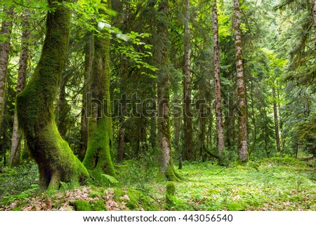 Abkhazia, a forest in the gorge - stock photo
