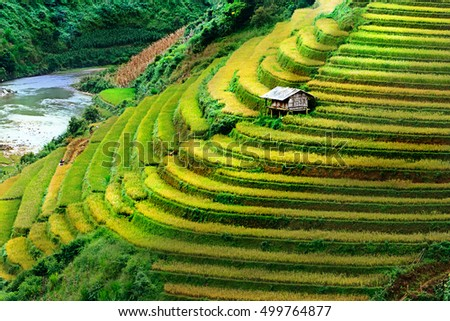 Aboriginal house on terraced fields in Mu Cang Chai, Yen Bai, Vietnam.