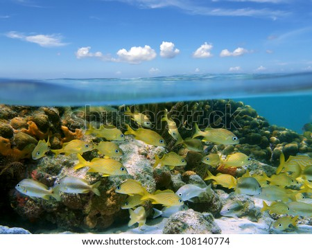 Above and below water surface in the Caribbean sea with a shoal of tropical fish in a coral reef and blue sky with small clouds - stock photo