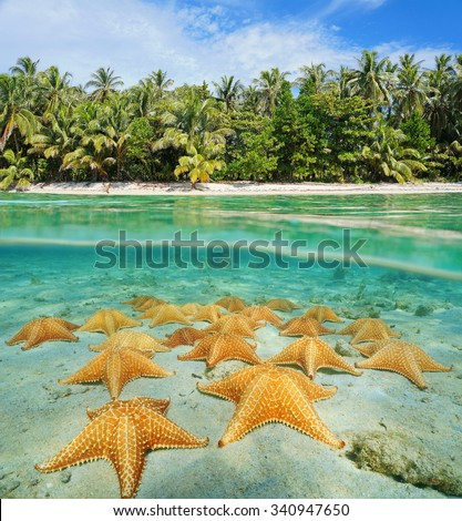 Above and below water surface near the shore of a tropical beach with many sea stars underwater on the ocean floor, Central America, Panama - stock photo