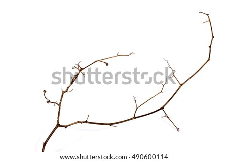 Above left side view studio shot of twig of dry dead plant on white background