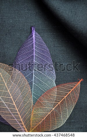 Above of colorful skeleton leaves on gray fabric - stock photo