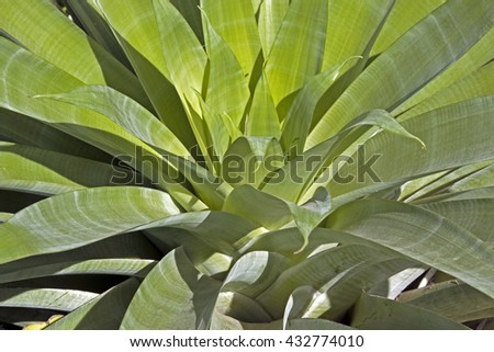 Above  view close up of patterns and textures of succulent green plant leaves - stock photo