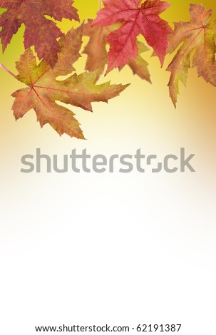 abstract autumn - stock photo
