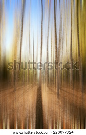 Abstract autumn forest - stock photo