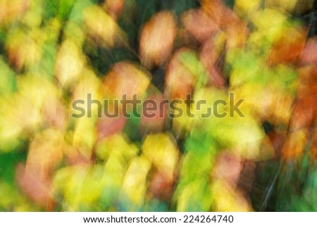 Abstract autumn leaves background texture - stock photo