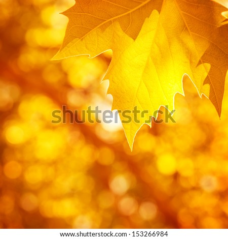 Abstract autumnal background, soft focus, dry golden maple tree leaf border, beautiful foliage, falling leaves, autumn nature concept - stock photo