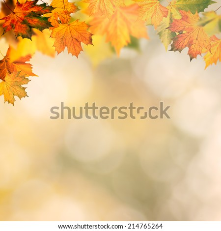 Abstract autumnal backgrounds wit yellow maple foliage - stock photo