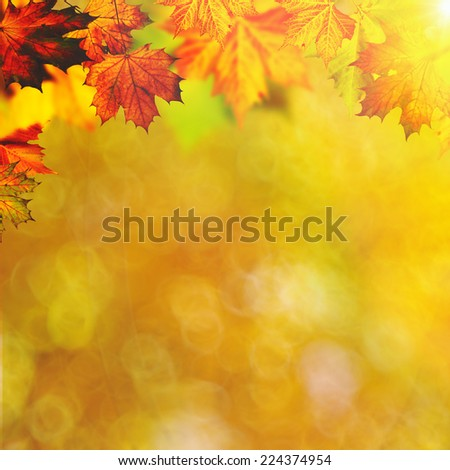 Abstract autumnal backgrounds with maple foliage - stock photo