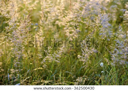 Abstract background by Grass lit by the sun against an autumn meadow background. Plants in deep forest day time rays  - stock photo