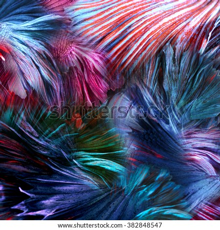 abstract background colorful fighting beta fish