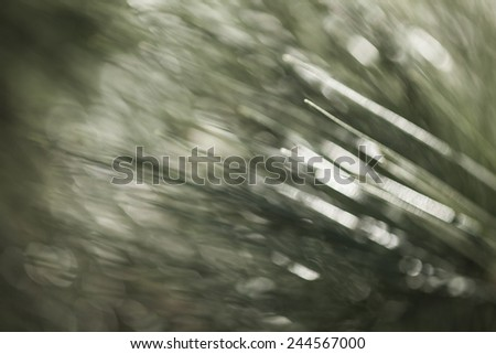 Abstract background conifers - stock photo